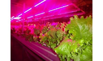 Светильники для роста растений